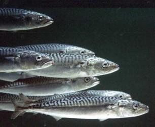 Poisson contaminé : le mercure lié au risque de diabète | Toxique, soyons vigilant ! | Scoop.it