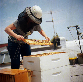 Farming & Agriculture: Top 10 Reasons to Become an Urban Beekeeper | Vertical Farm - Food Factory | Scoop.it