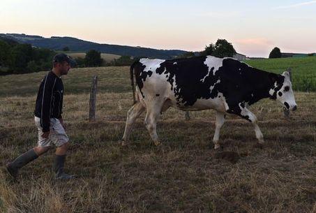 Crise des éleveurs: une situation d'urgence réclame des solutions pérennes - Le Monde | Le Fil @gricole | Scoop.it