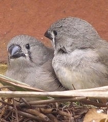 Le comportement des oiseaux serait plus influencé par l'environnement que par la génétique | Comportements, psychologie & génétique | Scoop.it