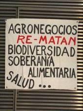 Paremos los cultivos transgénicos y los agrotóxicos - Kaos en la Red - kaosenlared.net   Propuestas ecologicas   Scoop.it