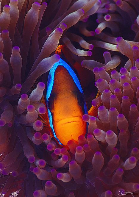 Underwater photography by Alan Delmas | InspireFirst | My Photo | Scoop.it