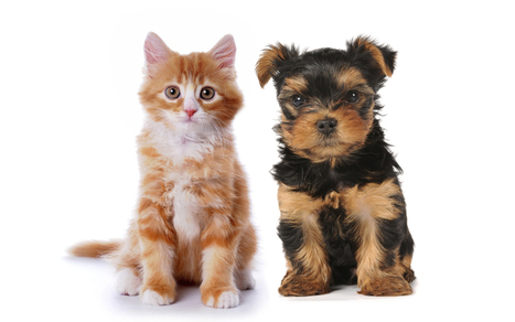Debunking 5 Myths about Shelter Cats and Dogs - Parade | Animal Rescue & Shelter Life | Scoop.it