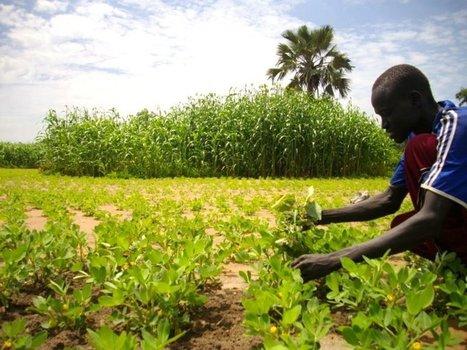 La société civile africaine se mobilise contre les accaparements de terres | Matière agricole | Scoop.it
