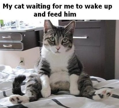 Cats - MEME, Funny Pictures and LOL | crazy cats | Scoop.it