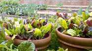 Vegetable gardening on a rooftop | Rooftop Permaculture & Biodiversity | Scoop.it