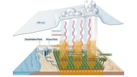 Árboles en el desierto para mitigar los efectos del cambio climático: | Gestión del Riesgo de Desastres | Scoop.it