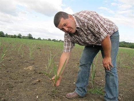 Guillaume cultive l'herbe à éléphant pour ses volailles - Ouest-France | Agr'energie | Scoop.it