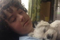 Young boy with autism starts fundraiser to get himself a service dog   autistic spectrum   Scoop.it