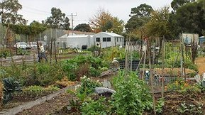 Growing food in the cities - ABC Online | Chico Aquaponics | Scoop.it