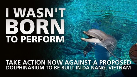 Da Nang People's Committee, Da Nang Department of Planning and Investment, Da Nang Investment Promotion Centre: No Dolphin Cruelty in Da Nang, Vietnam! | Reading Pool | Scoop.it