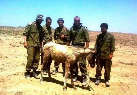 Julie the Gazan filly: Saved by the IDF | Israel News | Scoop.it