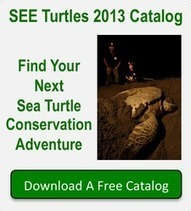 Facts About Sea Turtles | Effects of Global Warming on Sea Turtles | Scoop.it