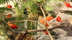 La serre amazonienne du parc zoologique de Montpellier fermée jusqu'au 9 décembre | Zoos Fermes Parcs | Scoop.it
