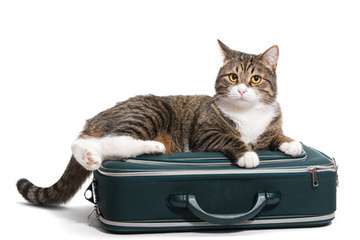 Dog Kennel (Boarding) vs. Pet Sitting | Pet Services | Scoop.it