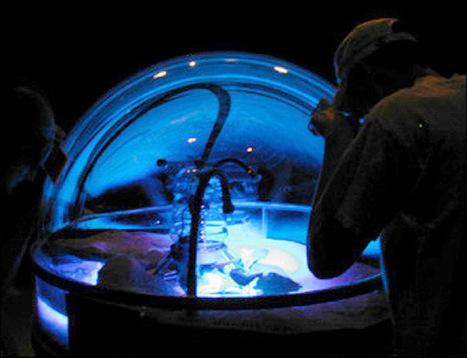 #Bioart : acte &eacute;cosophique, acte bleu<br/>de<br/>Christine Palmi&eacute;ri in Arch&eacute;e : cyberart et cyberculture artistique 04-2016 | Arts Num&eacute;riques - anthologie de textes | Scoop.it