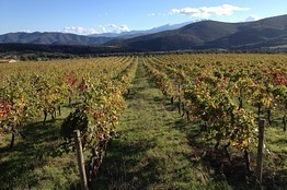 The Wild Beauty of France's Roussillon and Its Wines | Vitabella Wine Daily Gossip | Scoop.it