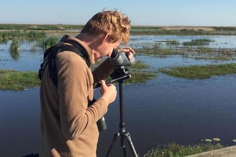 Big Year birder on course to set new North American single-year record - BirdWatching   Birding in the news   Scoop.it