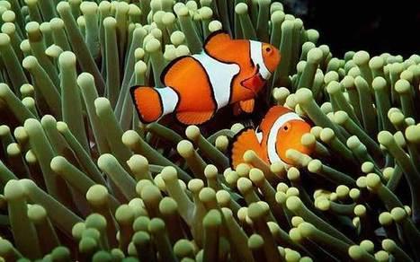 WWF: Australia in grave danger over Great Barrier Reef  - Telegraph | Australian environment | Scoop.it
