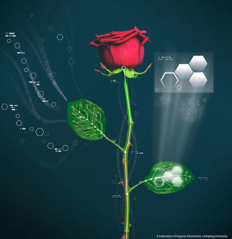 Scientists Just Grew Wires Inside Roses | DigitAG& journal | Scoop.it