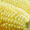 Quality maize export from India