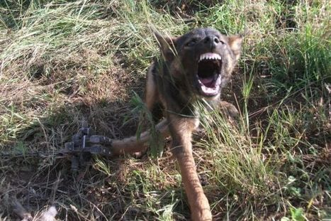 Hunter Valley farmers in dog fight | agribusiness | Scoop.it