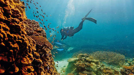 Barrier Reef: Dredge and dump projects approved | Geography | Scoop.it