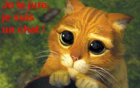 Un chat convoqué comme juré dans un procès | Mais n'importe quoi ! | Scoop.it
