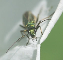 What bug is this? - Amateur Entomologists' Society (AES) | Life processes and living things | Scoop.it
