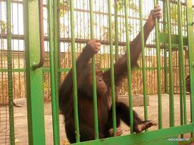 Kinshasa: le parc naturel de la N'sele de nouveau opérationnel - Radio Okapi | kin shasa | Scoop.it
