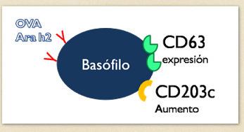 Activación de los basófilos | Funciones de Macrófagos, neutrófilos, eosinófilos, basófilos y celulas cebadas | Scoop.it