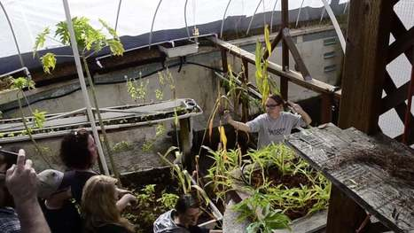 Urban Farmers given room to grow with PHX Renews | Vertical Farm - Food Factory | Scoop.it