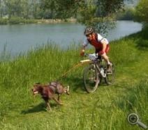 Canicross  et canivtt, deux disciplines originales en plein développement dans la vallée de la Sensée | Le sport avec un chien - Sport with dogs | Scoop.it