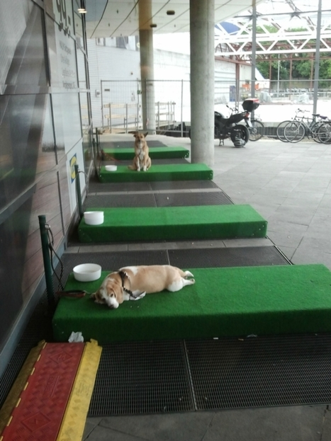 IKEA Provides 'Dog Parking' For Shoppers With Pets - #MarketingTip - Know Your Customer | All About Pets | Scoop.it