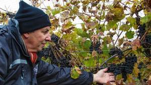 How Canadian wineries are bottling success in Asia - Globe and Mail | 'Winebanter' | Scoop.it