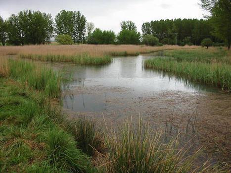 Los humedales degradados tardan 30 años en restaurarse | Planeta Tierra | Scoop.it
