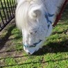 Pony Rides Sydney