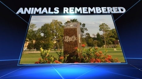 Memorial service on Aug. 28 to remember animal lives lost during Hurricane Katrina - WDSU New Orleans | Services | Scoop.it