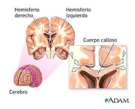 GIMNASIA CEREBRAL en el Aula   Gimnasia Cerebral   Scoop.it