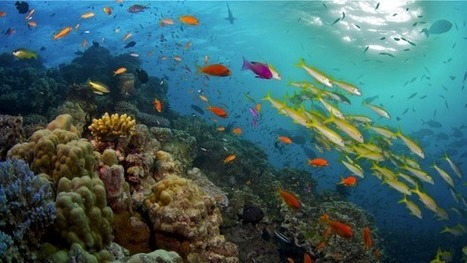 UNESCO world heritage experts decide not to list the Great Barrier Reef as being 'in danger' | Sustain Our Earth | Scoop.it