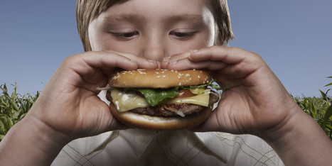 The Environmental Impact Of Your Hamburger (INFOGRAPHIC) | Food issues | Scoop.it