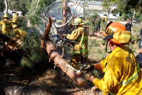 Investigation Begins in Park Tree Fall Incident in Pasadena | California Premises Accidents and Injury Attorney Claim Information | Scoop.it