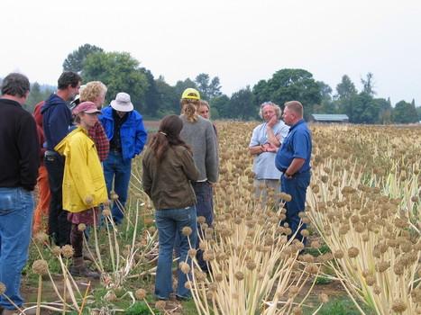 Why Organic Seed ?   Graines de Troc - Seeds swaping   Scoop.it