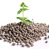 Plant phosphate nutrition