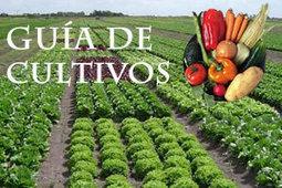 Las buenas prácticas agrícolas, la mejor garantía de seguridad alimentaria | Seguridad Alimentaria - YoComproSano | Scoop.it