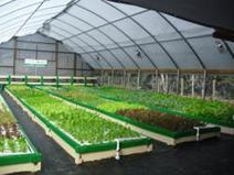 Are YOU Ready to Join the Farm Revolution? Green Acre's Aquaponic Farming - The Complete Course Is Your First Step! | Vertical Farm - Food Factory | Scoop.it