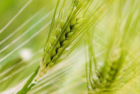Plant Based Summit : le congrès européen des produits biosourcés | UP' Magazine | Scoop.it