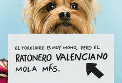 La publicidad evoluciona: de lo viral a lo local - valenciaplaza.com | Marketing & Publicidad | Scoop.it