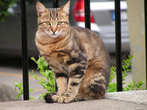Tips on How to Find a Lost Cat | cats & dogs! | Scoop.it