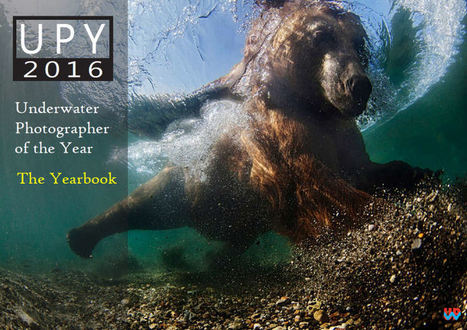 Underwater Photographer of the Year - 2016 Yearbook | Art, Photography, etc | Scoop.it